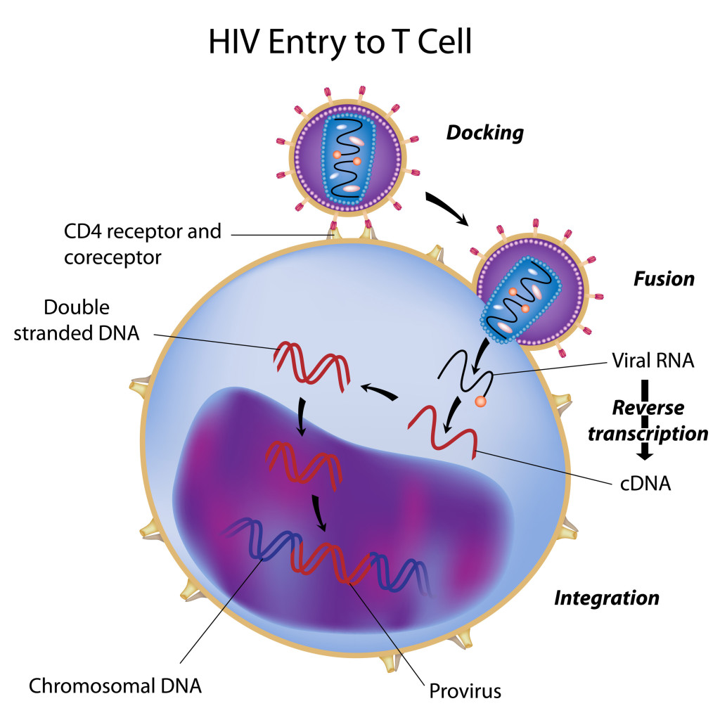 the history and causes of aids Aids is caused by a human immunodeficiency virus (hiv), which originated in non-human primates in central and west africa while various sub-groups of the virus acquired human infectivity at different times, the global pandemic had its origins in the emergence of one specific strain – hiv-1 subgroup m – in léopoldville.