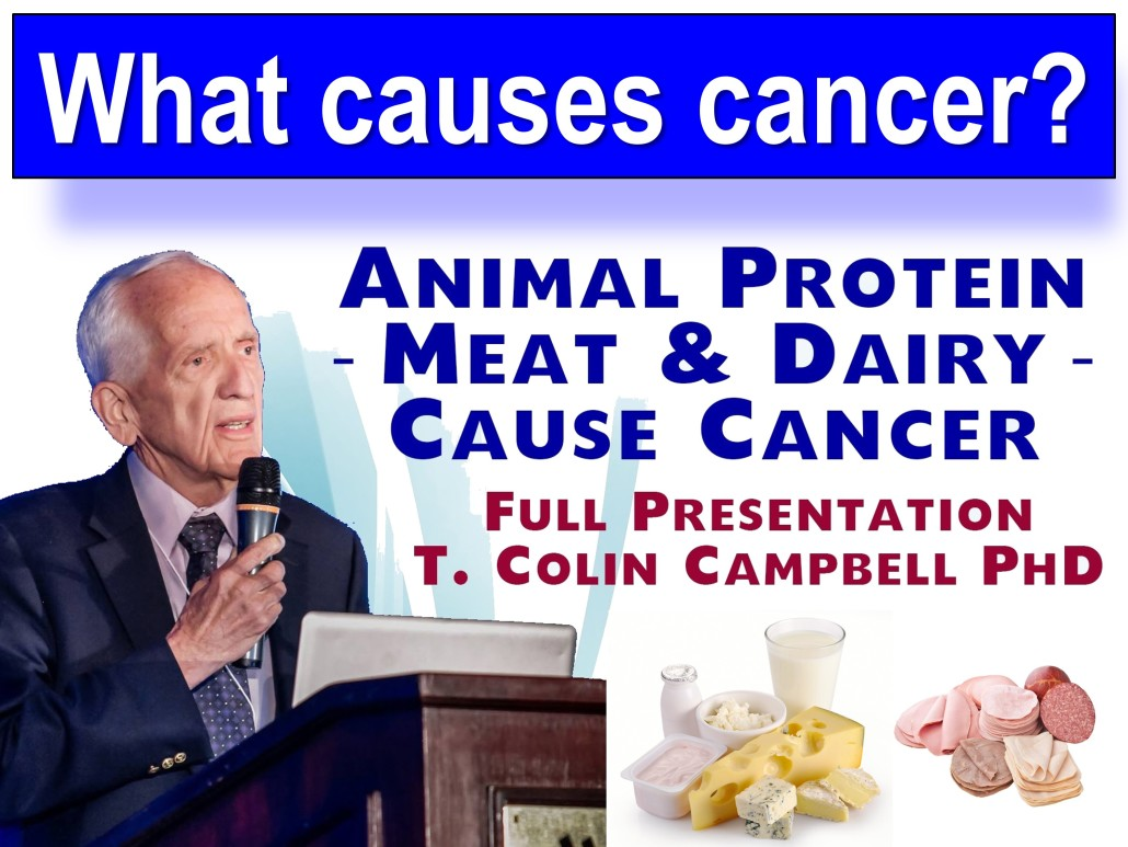 Meat and dairy key causes of Cancer - China Study
