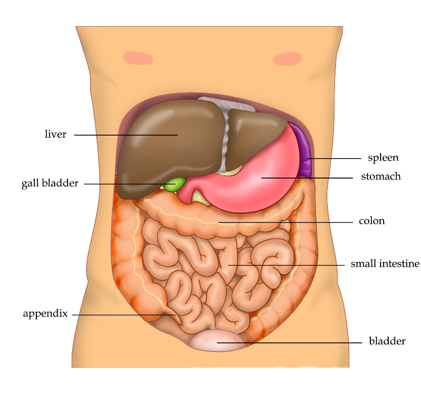 Hepatitis, Liver Cirrhosis, Fatty Liver