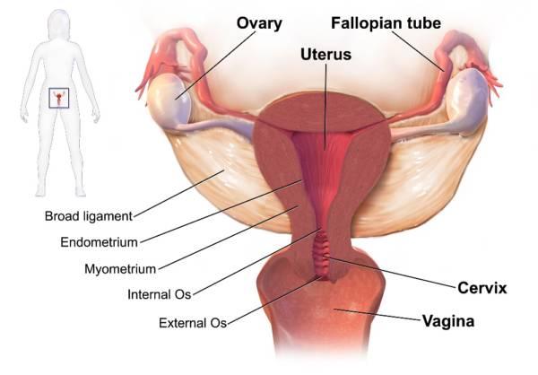 Heavy Menstrual Bleeding (Menorrhagia)