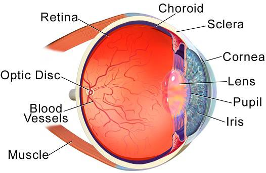 How to Prevent and Treat the Most Common Eye Problems
