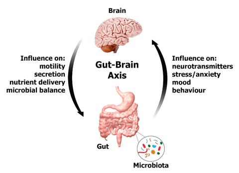 HOW PSYCHOBIOTICS INCREASE GOOD MOOD HORMONES SUCH AS GABA