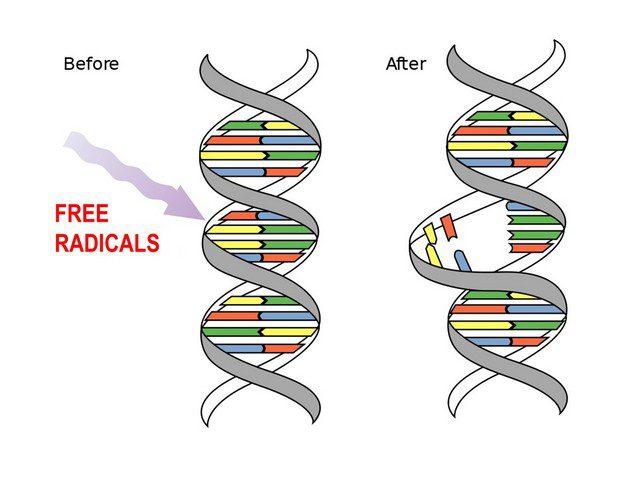 ANTIOXIDANTS & FREE RADICALS